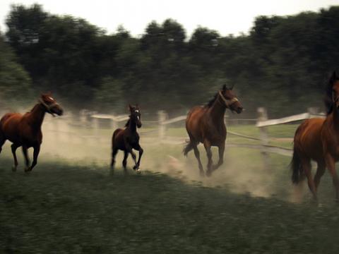 caballos-serbia.jpg